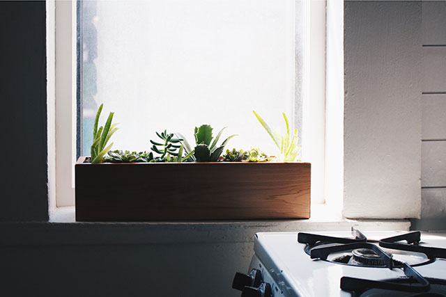Windowsill buddies. How to plant and care for succulents.