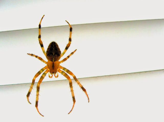 Spider 3D White Wallpaper