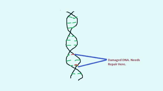 DNA-errors