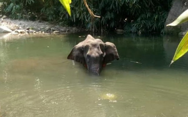 India's worst pandemic- Viral misinformation explained through the Kerala elephant death episode