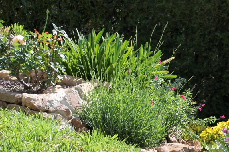 jardin rocalla