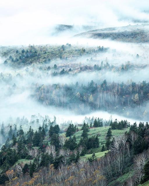 霧,雲海,林
