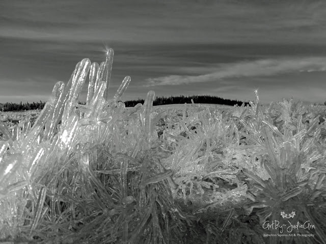 Photography Print Icy Field