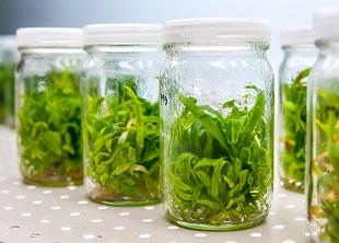 Plant Tissue Culture 2 Week training