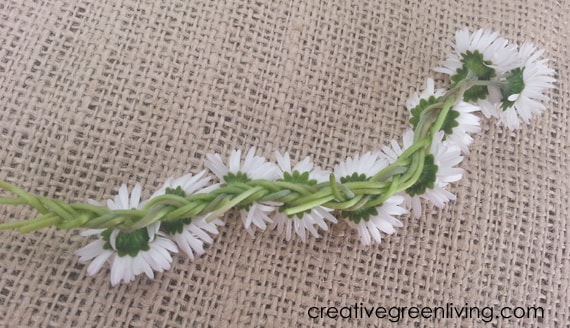 the back of a braided daisy chain