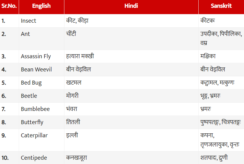 Insect meaning and name in Hindi