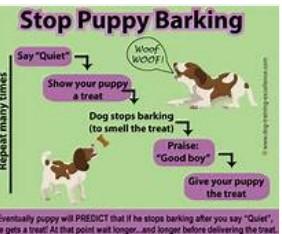 지금 소음을 만들기에서 당신의 강아지를 중지!