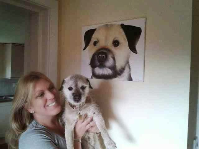 Border Terrier Dog Portrait
