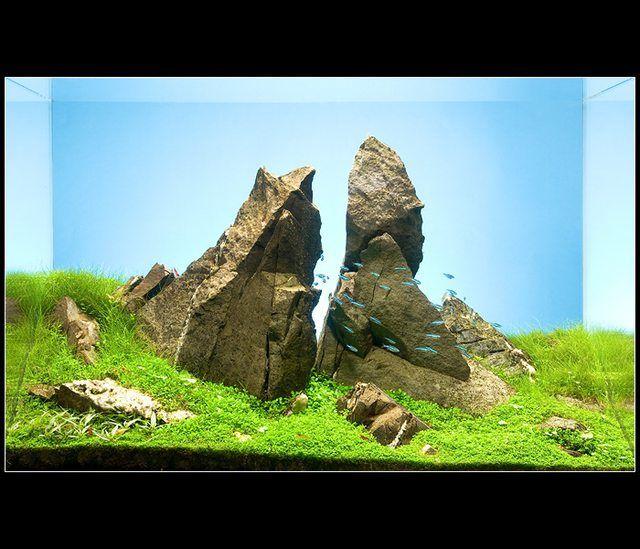 đá xanh trong bố cục hồ thủy sinh hoàn chỉnh