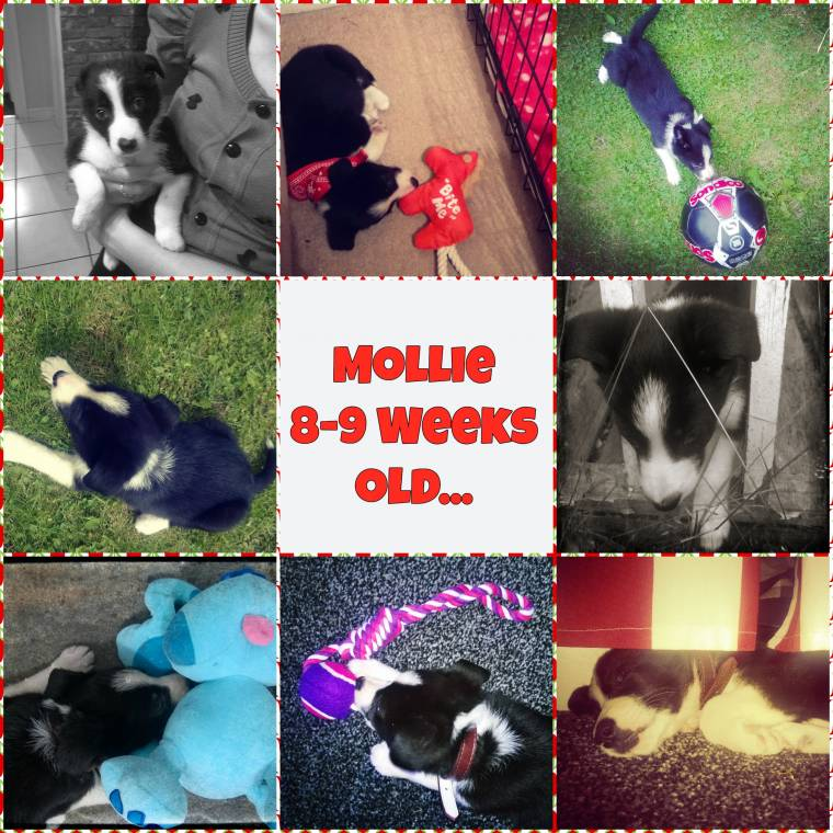 Flashback Friday: Mollie 8-10 Weeks Old