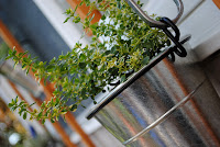 Plant in a silver bucket