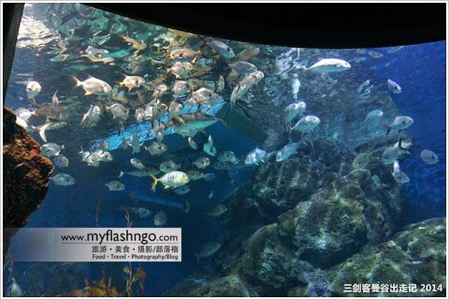 2014 | 曼谷暹罗之《全东南亚最大的水族馆》 7