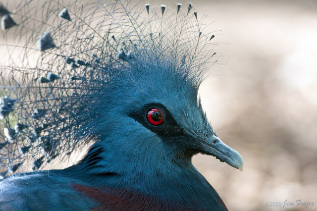 Bird Pictures Amazing Birds: Funny Cool Pictures: Beautiful Birds Of The World