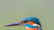 Kingfisher Bird Mobile Wallpaper