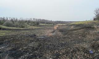 Згарище у заплаві потічка Солоненького, притоки річки Солоної