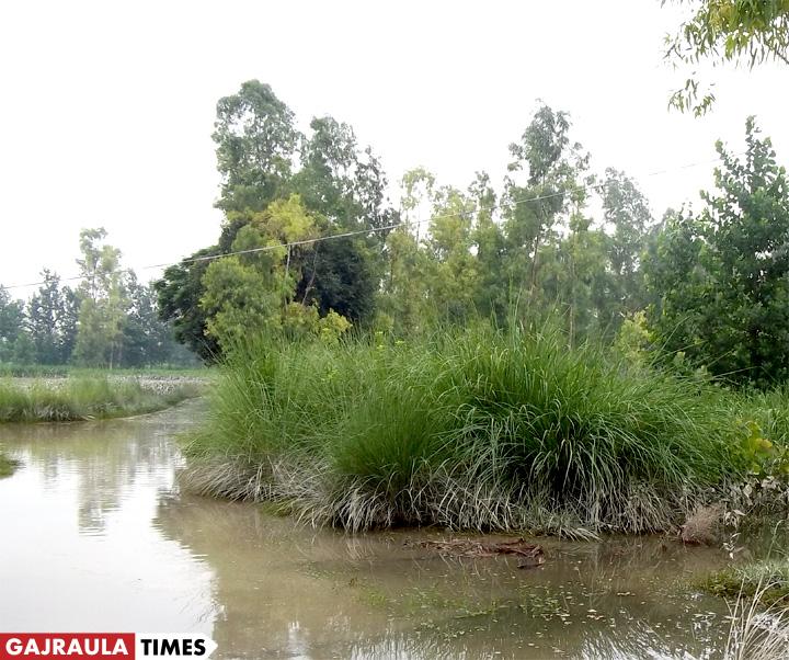 tigri-ganga-flood-gajraula