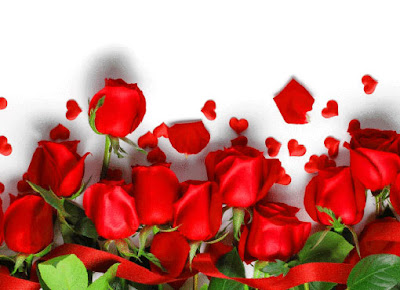 hd wallpapers 1080 px rose red  wallpaper for   mobile