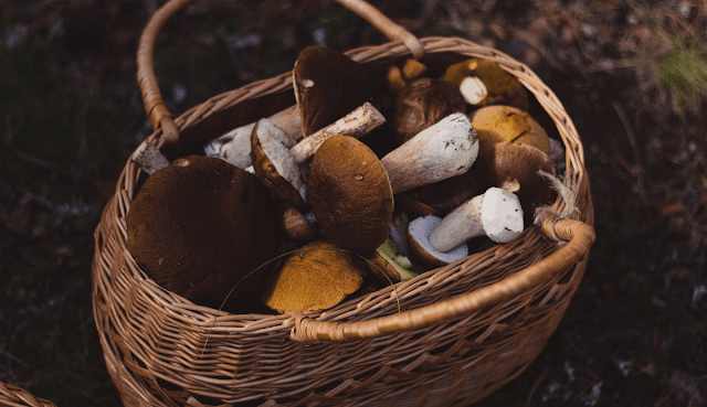 The Best Tips to Get Started in the World of Mushrooms