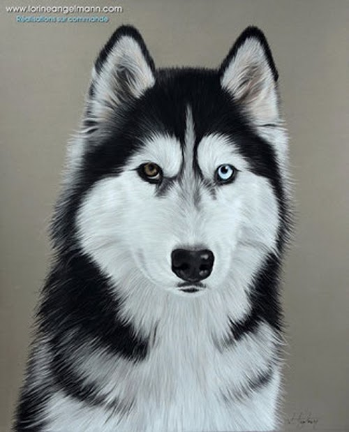 04-Alaskan-Malamute-Lorine-Angelmann-Cool-Realistic-Animal-Drawings-www-designstack-co