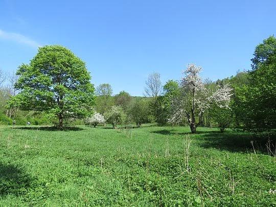 Łąka z drzewami owocowymi.