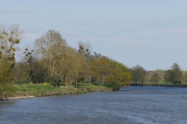 La Vilaine à Redon, à la Belle Anguille