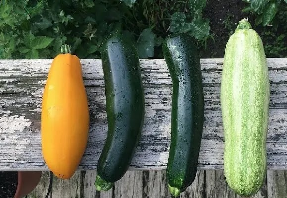 zucchini in marathi