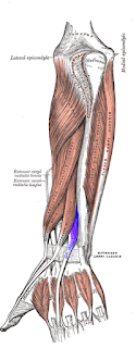 exenstor indicis muscles- by  www.learningwayeasy.com