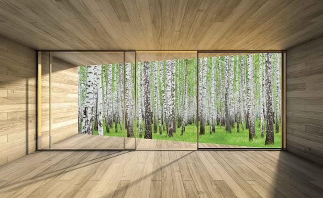 foto behang bos natuur fotoprint foto aan de muur muurdecoratie