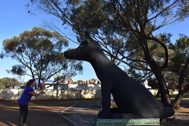 BIG Black Dog   Corrigin