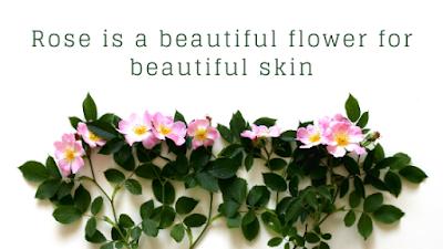 Mengenal Lebih Jauh Tentang Bunga Mawar