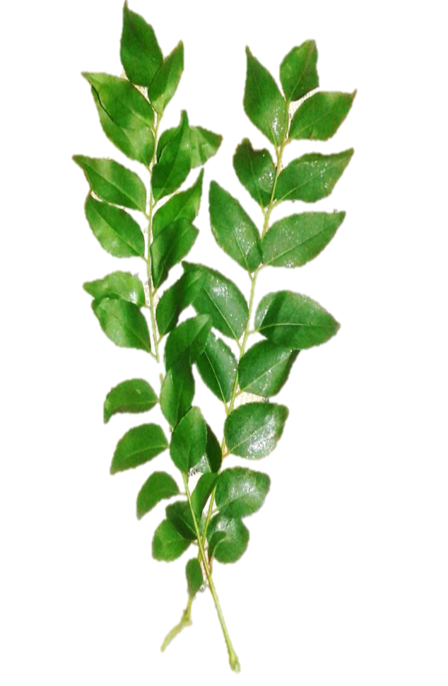 curry leaves special desi recipes