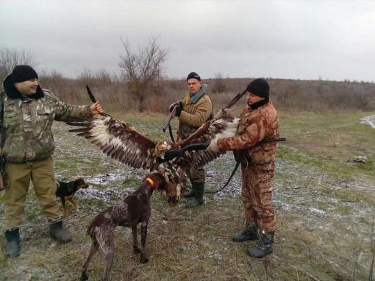 Чиновники-браконьеры убили на охотередкую птицу – беркута, и похвасталисьэтим