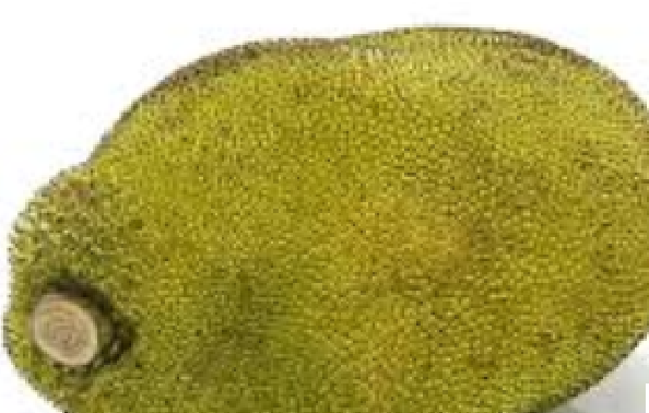 Jackfruit meaning in tamil, telugu, marathi, kannada, malayalam, in hindi name, gujarati, in marathi, indian name, english, other names called as, translation