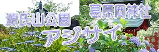 アジサイ:源氏山公園・葛原岡神社