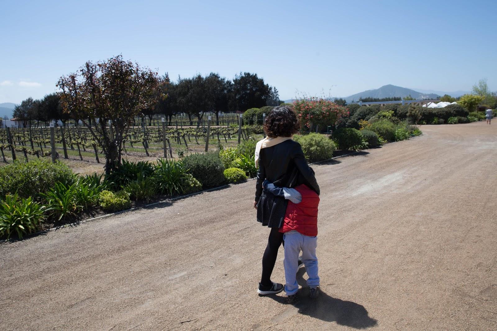Vinícola com criança Casas del bosque Vale de Casablanca Vinicola chilena