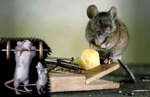 Cara Mengusir Tikus Paling Ampuh dan Aman