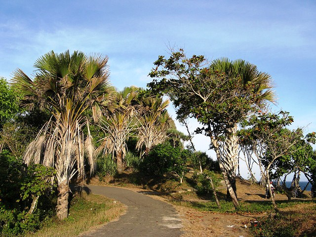 Papuma Beach's Road