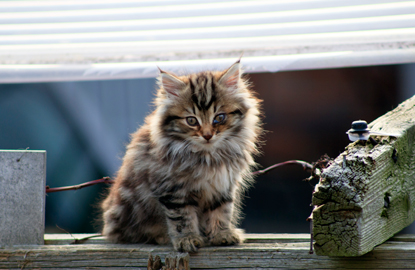 tabby kitten with injured eye sitting on fence