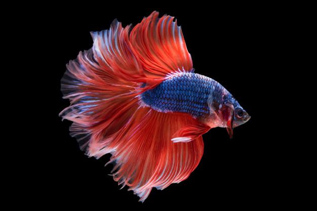 Suitable Betta Fish Tank Decor