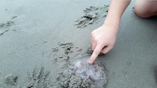 Γιατί δεν πρέπει να βγάζετε μέδουσες και τσούχτρες στις παραλίες