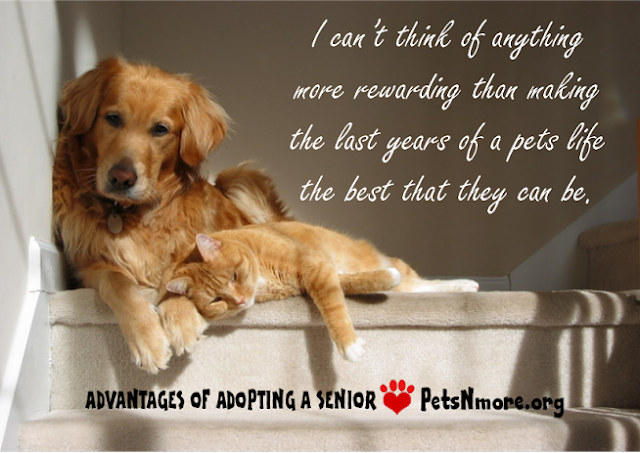 dog, cat, pet, animal, senior pet, adopt, www.petsnmore.org