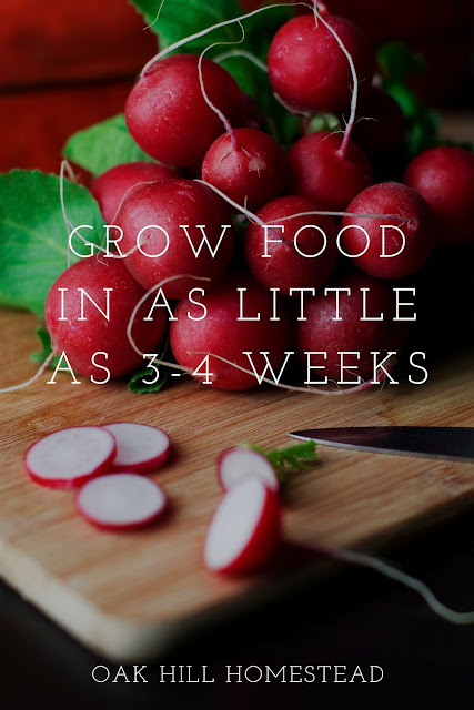 You can grow food in as little as 3-4 weeks, and sprouts in even less time! This list tells you what to plant and when, and approximate harvest dates too. Start gardening and grow your own food!