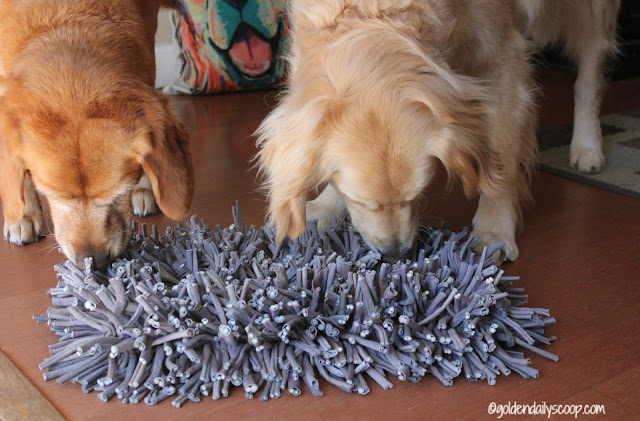 golden-retrievers-review-of-paw5-wooly-snuffle-mat