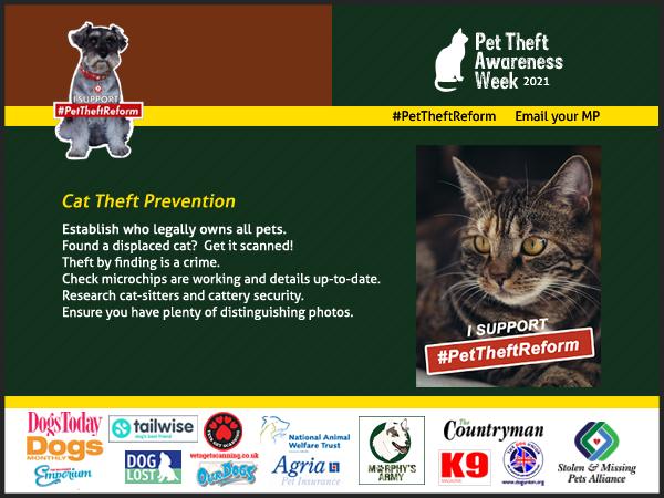 Cat Theft Prevention