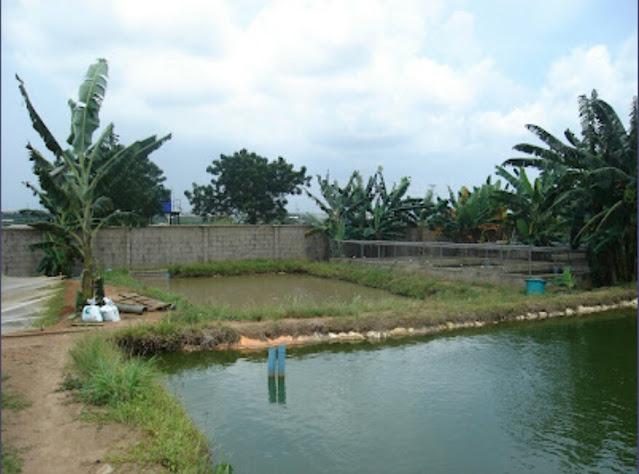 """Alt: = """"earthen pond picture"""""""
