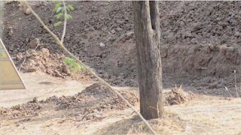 Viral new challenge: Twitter cannot find the leopard in this new pic. Can you?