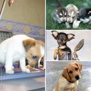 Собака - очень дружелюбное существо, она не приемлет лицемерие и вранье.