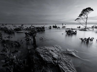 black and white mangrove wallpaper