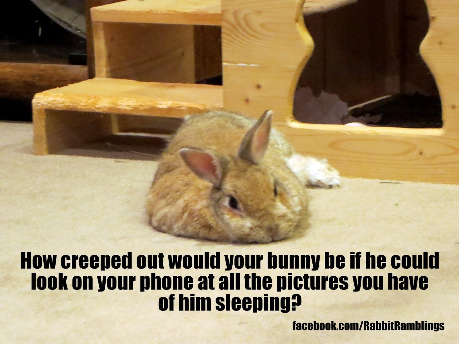 Sleeping bunny meme