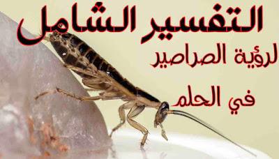 التفسير الشامل لرؤية الصراصير في الحلم ومعني صراصير الحلم